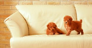 Что дает мягкая мебель в интерьере гостиной?
